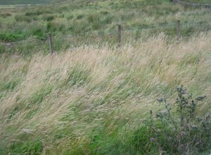 Grasses blow in the wind